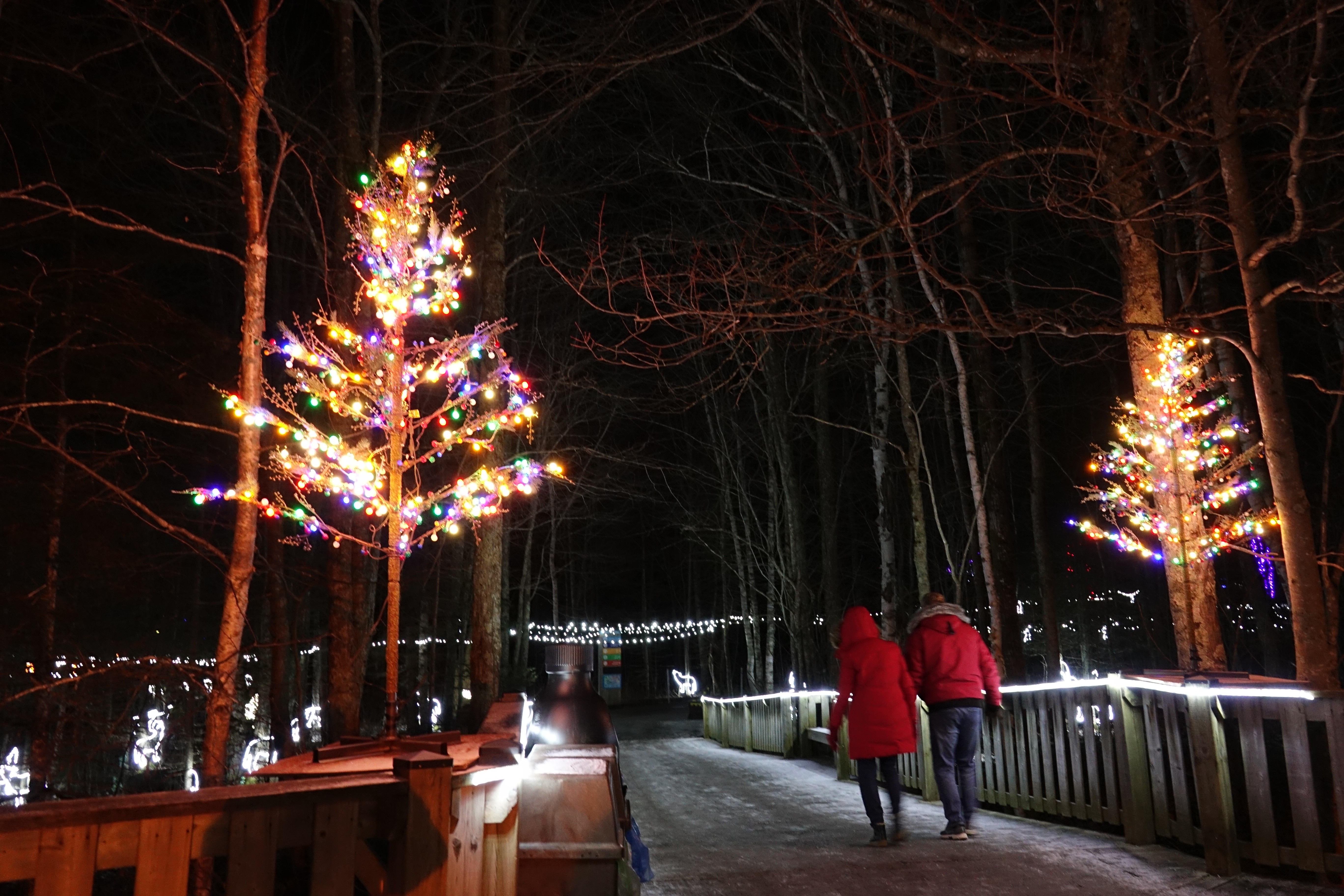 Magnetic Hill Zoo Wild Lights - December 10, 2020 – January 2, 2021